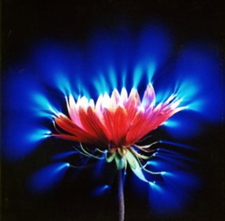 Фото свечение цветов